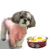 Best Dog Food for Shih Tzu with Sensitive Stomach